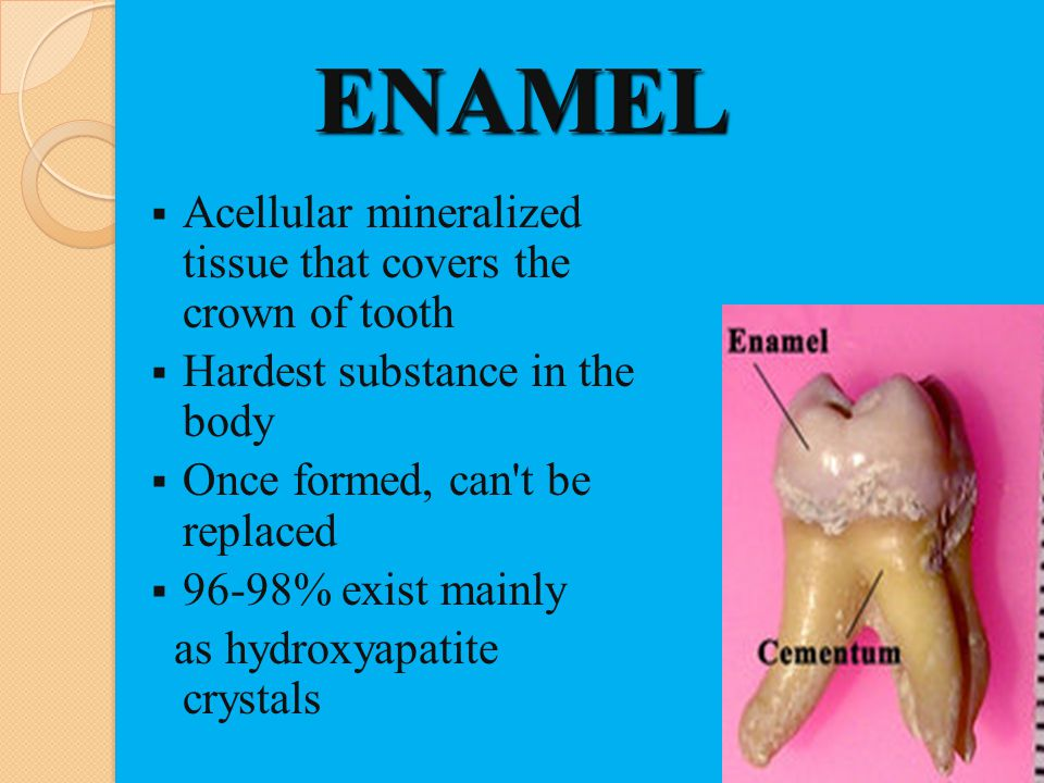 ENAMEL Acellular mineralized tissue that covers the crown of tooth Hardest substance in the body Once formed, can't be replaced 96-98% exist mainly as