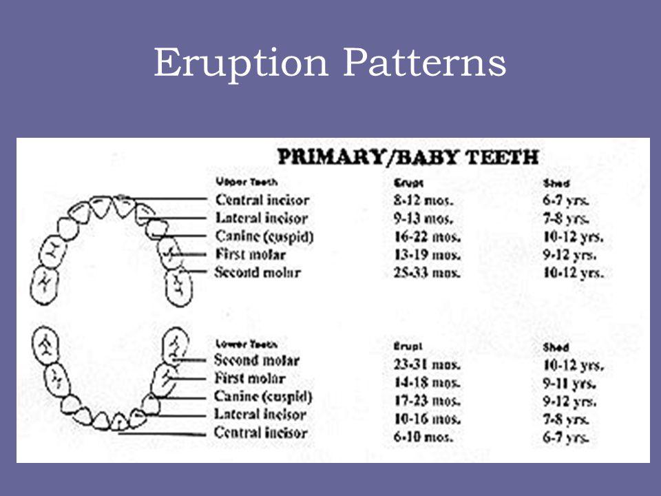 Eruption Patterns