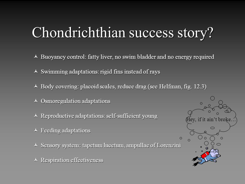 Chondrichthian success story.