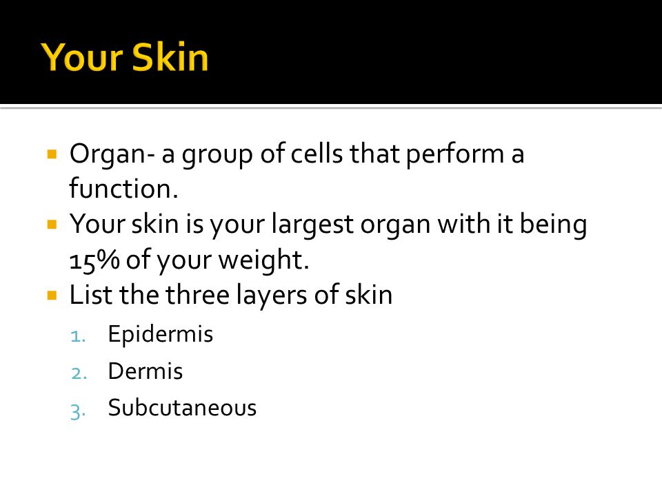 Organ- a group of cells that perform a function.