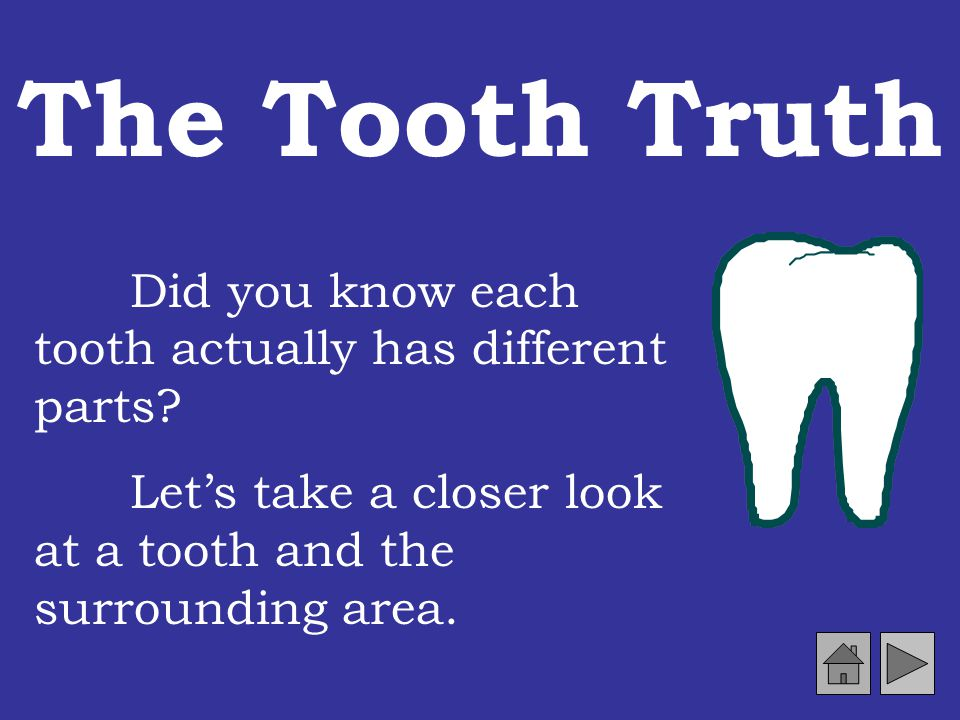 Molars chewing teeth Molars are the broad, lumpy teeth in the back of your mouth. Molars are used to chew food. You have 12 molars.