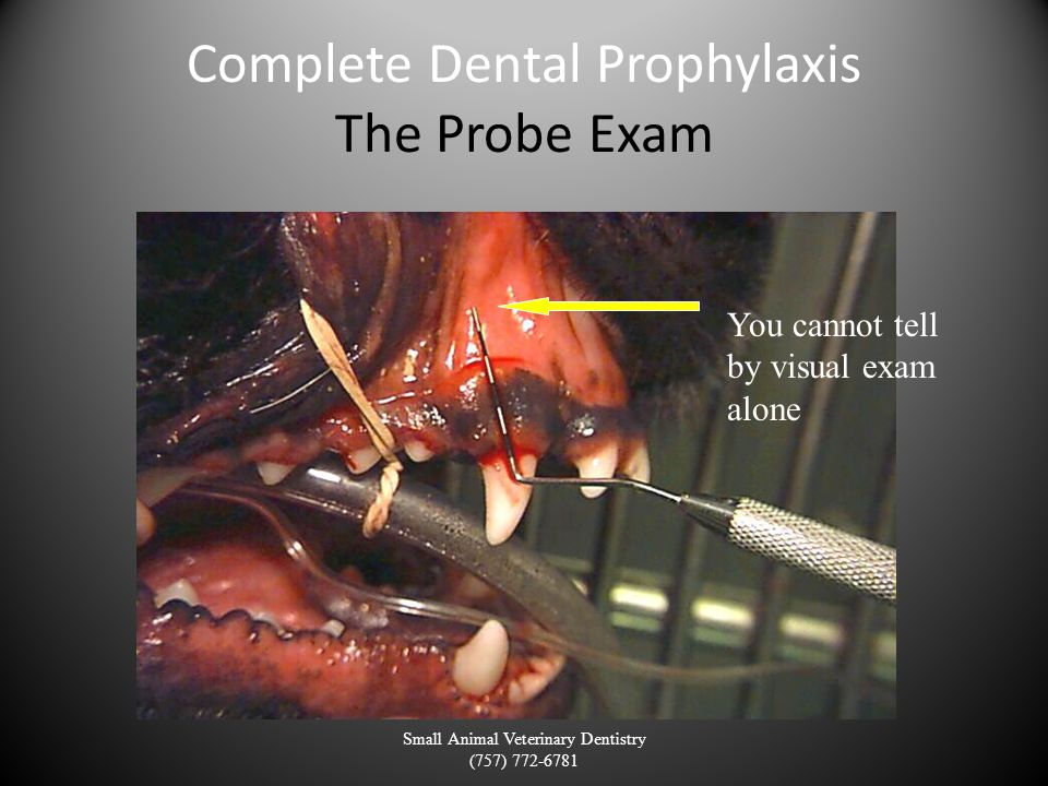 Complete Dental Prophylaxis The Probe Exam Small Animal Veterinary Dentistry (757) 772-6781 You cannot tell by visual exam alone