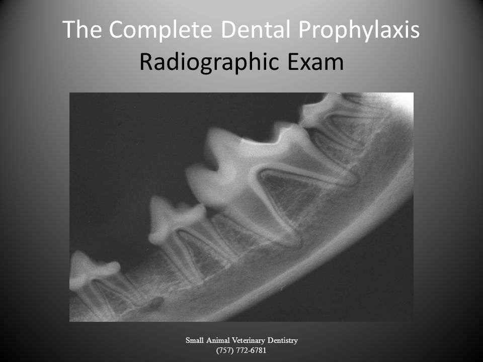 The Complete Dental Prophylaxis Radiographic Exam Small Animal Veterinary Dentistry (757) 772-6781