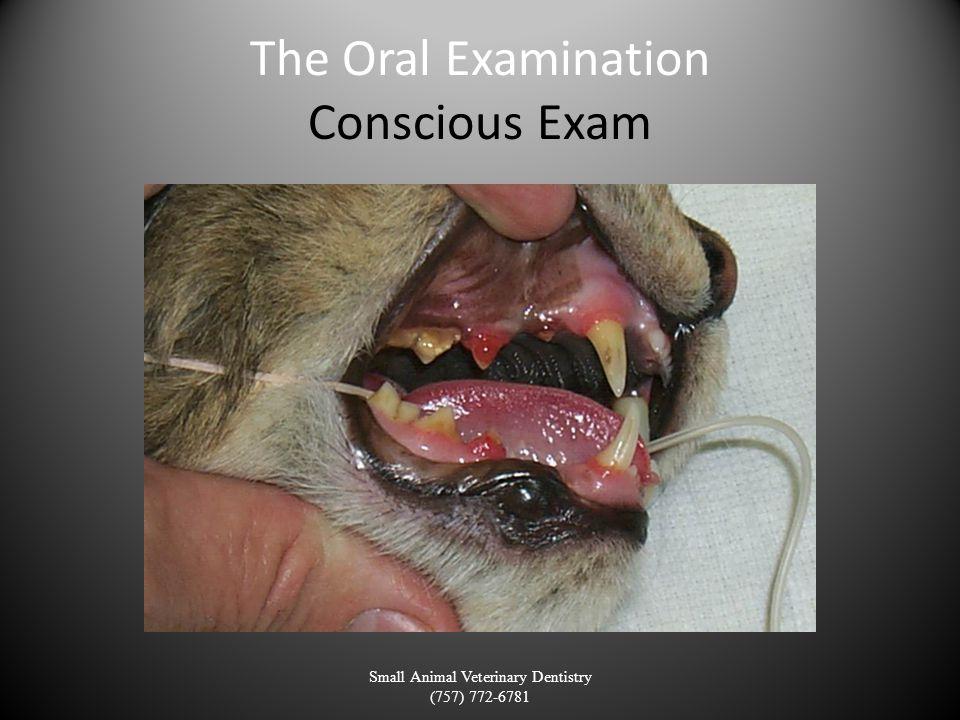 The Oral Examination Conscious Exam Small Animal Veterinary Dentistry (757) 772-6781