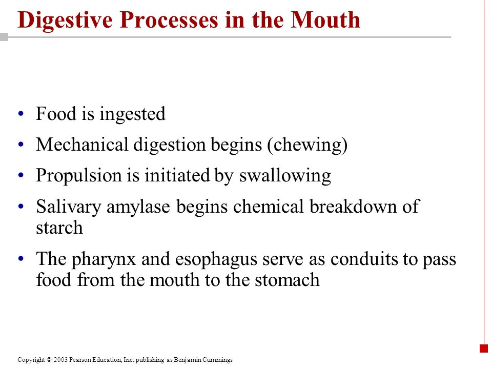 Copyright © 2003 Pearson Education, Inc. publishing as Benjamin Cummings Digestive Processes in the Mouth Food is ingested Mechanical digestion begins