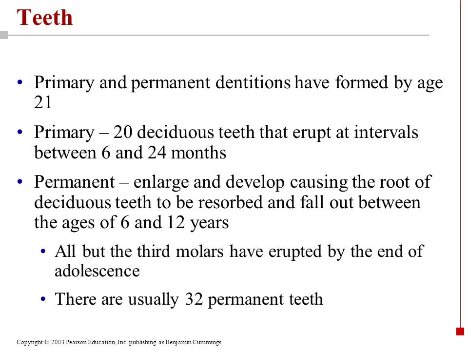 Copyright © 2003 Pearson Education, Inc. publishing as Benjamin Cummings Teeth Primary and permanent dentitions have formed by age 21 Primary – 20 dec
