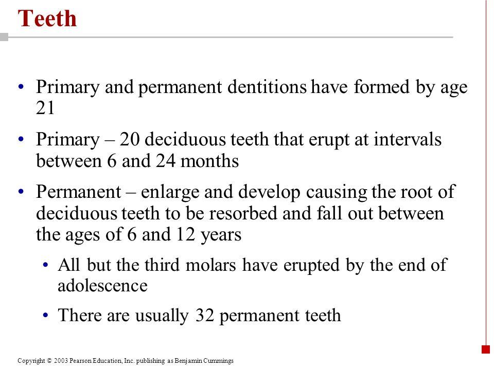 Copyright © 2003 Pearson Education, Inc. publishing as Benjamin Cummings Teeth Figure 24.10.1