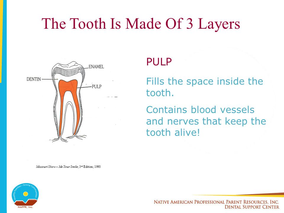 The Tooth Is Made Of 3 Layers PULP Fills the space inside the tooth. Contains blood vessels and nerves that keep the tooth alive! Missouri Show – Me Y