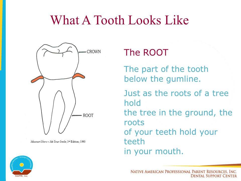 The Tooth Is Made Of 3 Layers ENAMEL Covers the crown.