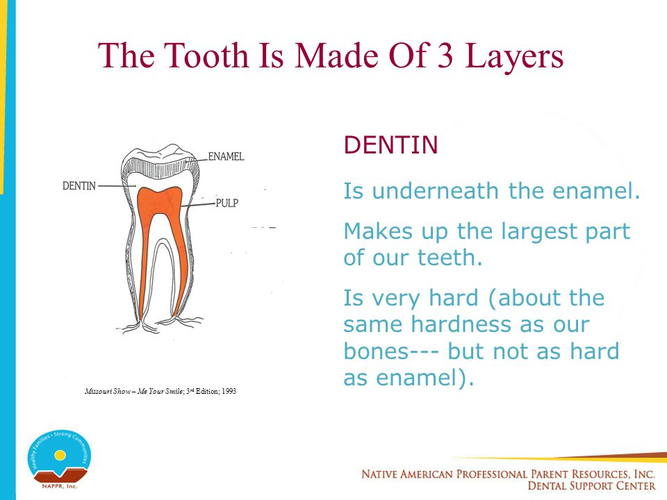 The Tooth Is Made Of 3 Layers PULP Fills the space inside the tooth.