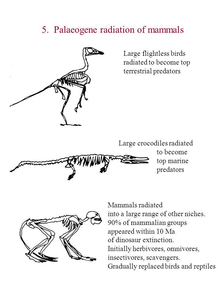 5. Palaeogene radiation of mammals Large flightless birds radiated to become top terrestrial predators Large crocodiles radiated to become top marine
