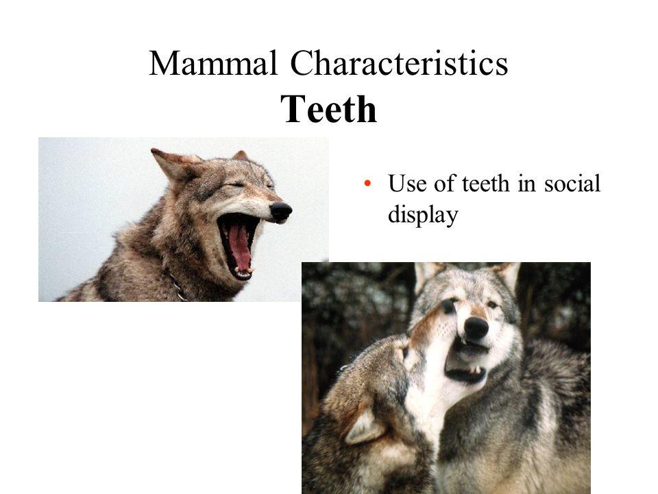 Mammal Characteristics Teeth Use of teeth in social display