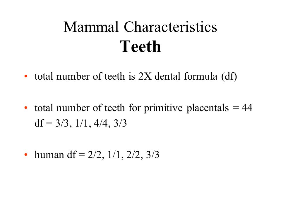 Mammal Characteristics Teeth total number of teeth is 2X dental formula (df) total number of teeth for primitive placentals = 44 df = 3/3, 1/1, 4/4, 3