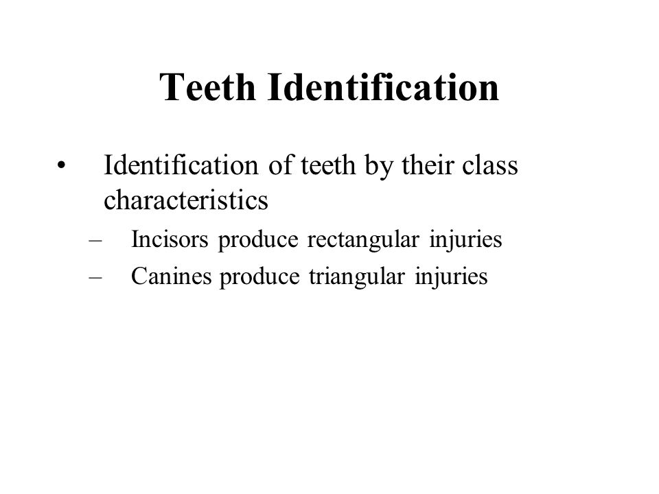 Teeth Identification Identification of teeth by their class characteristics –Incisors produce rectangular injuries –Canines produce triangular injuries