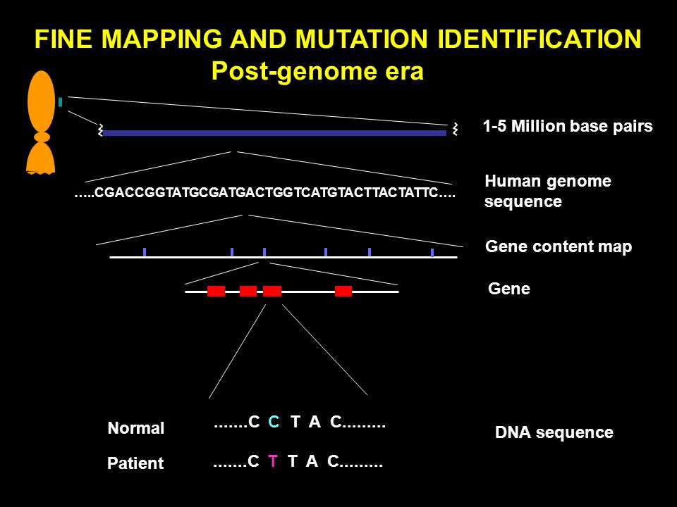 FINE MAPPING AND MUTATION IDENTIFICATION Post-genome era Gene Normal Patient.......C C T A C.........