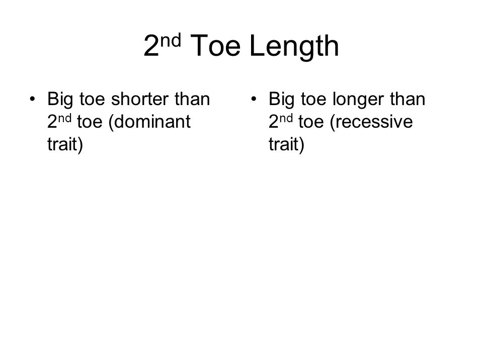2 nd Toe Length Big toe shorter than 2 nd toe (dominant trait) Big toe longer than 2 nd toe (recessive trait)