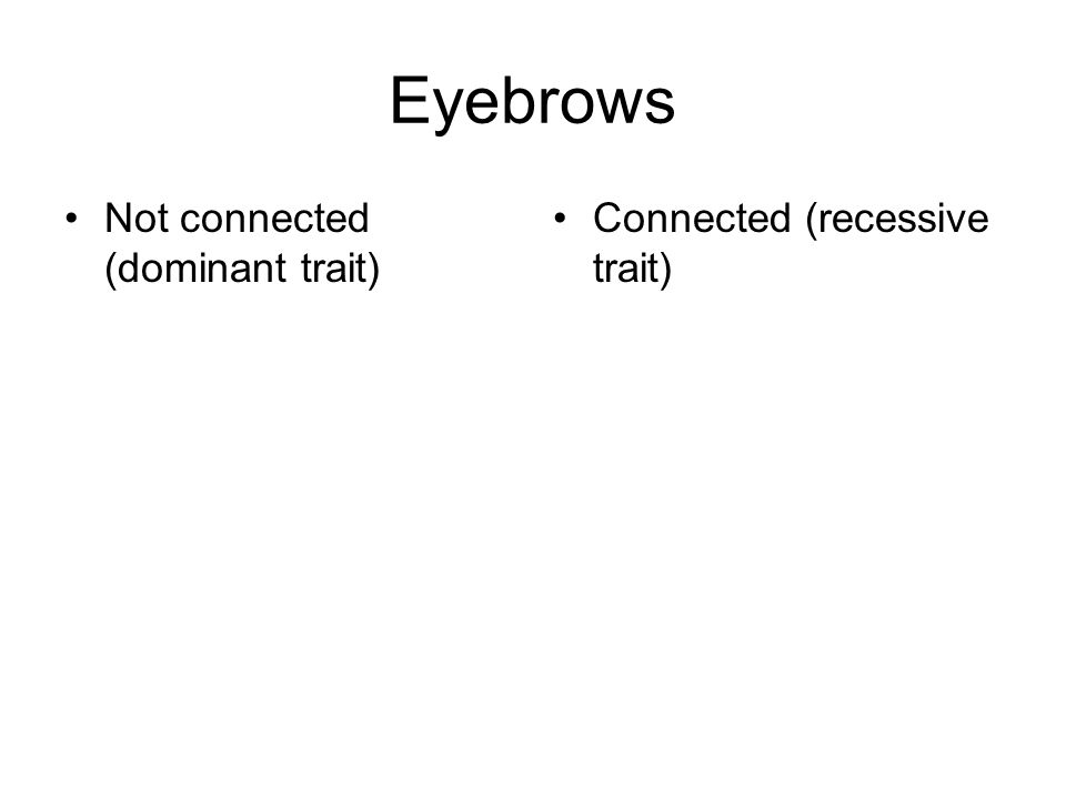 Eyebrows Not connected (dominant trait) Connected (recessive trait)