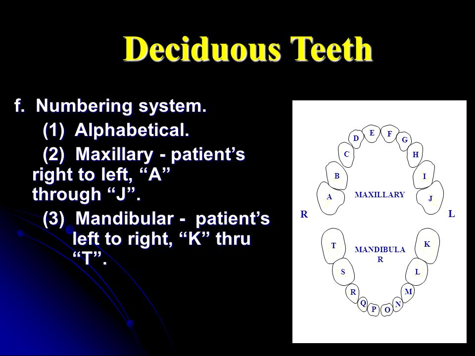 f. Numbering system. (1) Alphabetical. (1) Alphabetical. (2) Maxillary - patients right to left, A through J. (2) Maxillary - patients right to left,