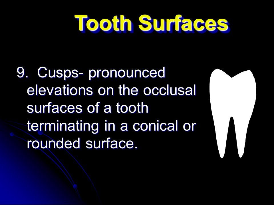 9. Cusps- pronounced elevations on the occlusal surfaces of a tooth terminating in a conical or rounded surface. Tooth Surfaces
