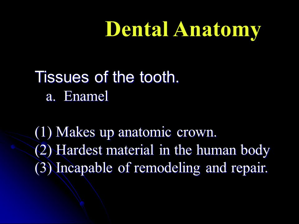Tissues of the tooth. a. Enamel (1) Makes up anatomic crown. (2) Hardest material in the human body (3) Incapable of remodeling and repair. Dental Ana