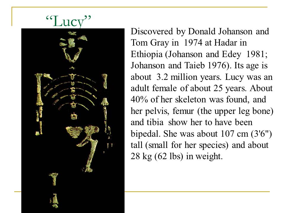 Lucy Discovered by Donald Johanson and Tom Gray in 1974 at Hadar in Ethiopia (Johanson and Edey 1981; Johanson and Taieb 1976). Its age is about 3.2 m