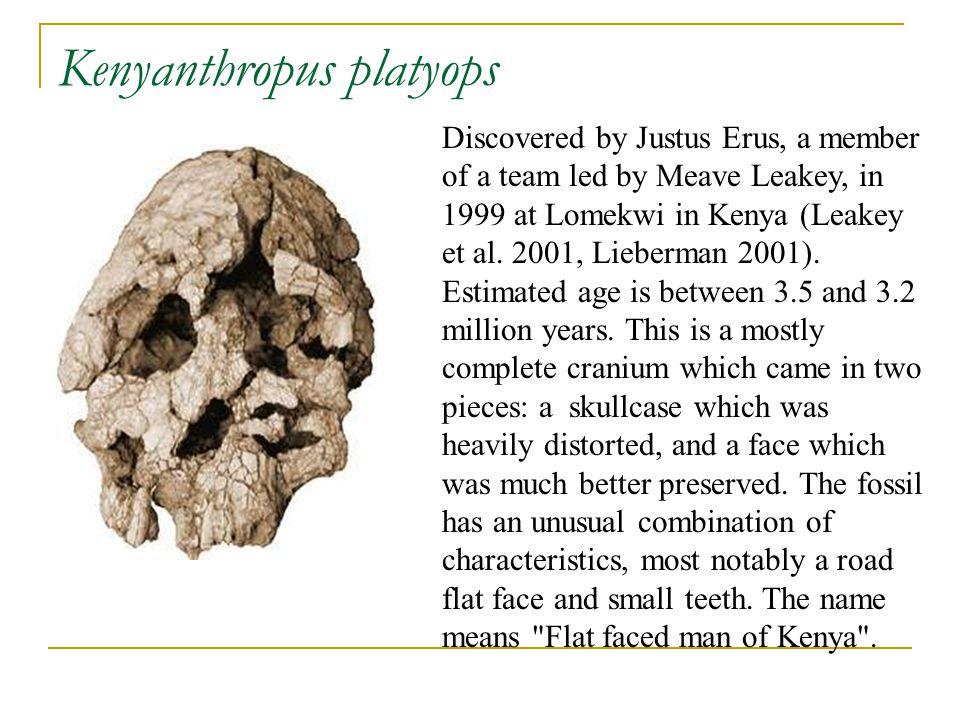 Kenyanthropus platyops Discovered by Justus Erus, a member of a team led by Meave Leakey, in 1999 at Lomekwi in Kenya (Leakey et al. 2001, Lieberman 2
