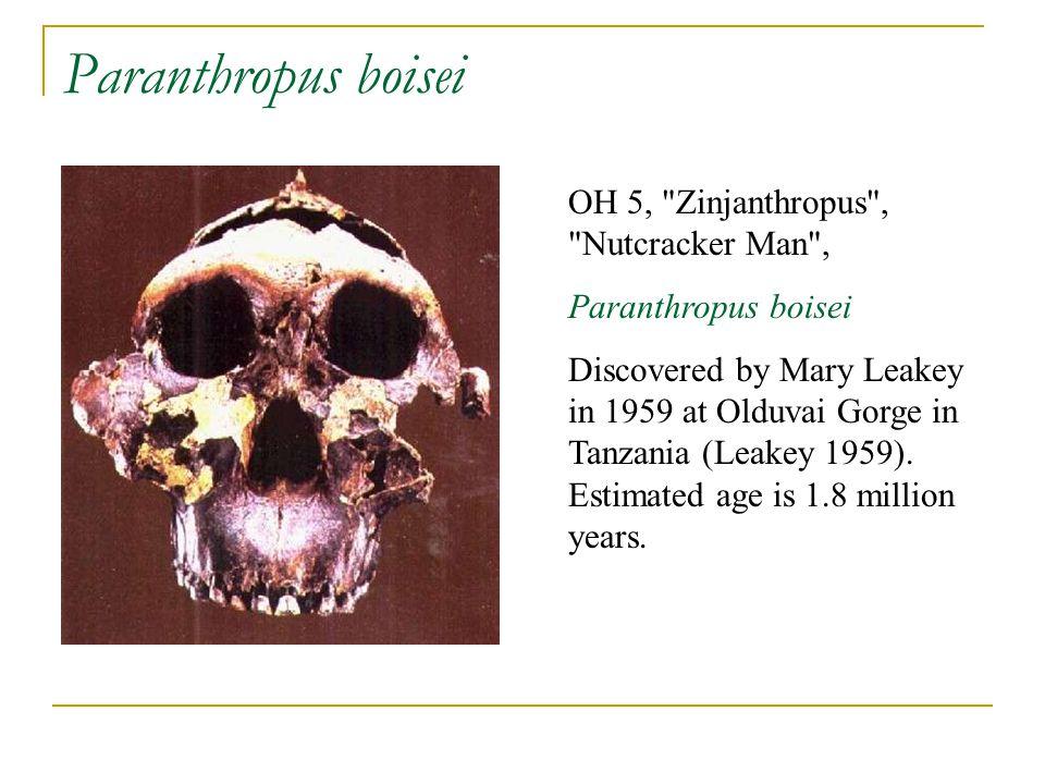 Paranthropus boisei OH 5,