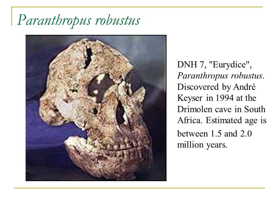 Paranthropus robustus DNH 7,