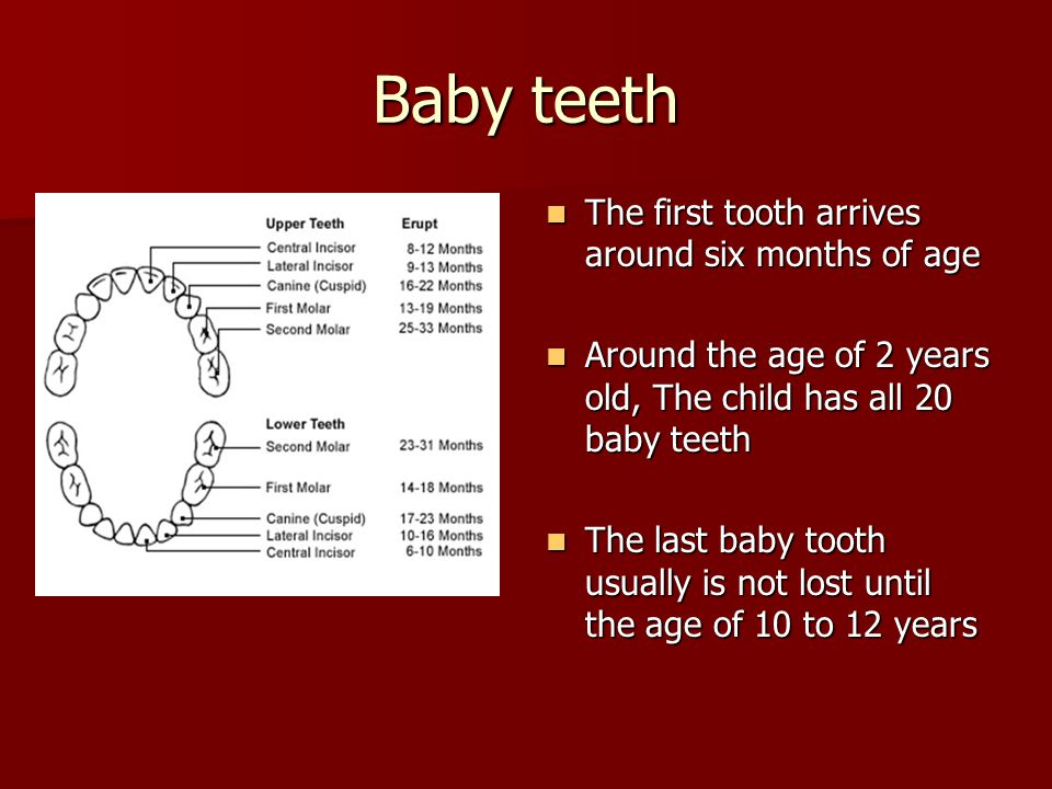 Baby teeth The first tooth arrives around six months of age The first tooth arrives around six months of age Around the age of 2 years old, The child has all 20 baby teeth Around the age of 2 years old, The child has all 20 baby teeth The last baby tooth usually is not lost until the age of 10 to 12 years The last baby tooth usually is not lost until the age of 10 to 12 years