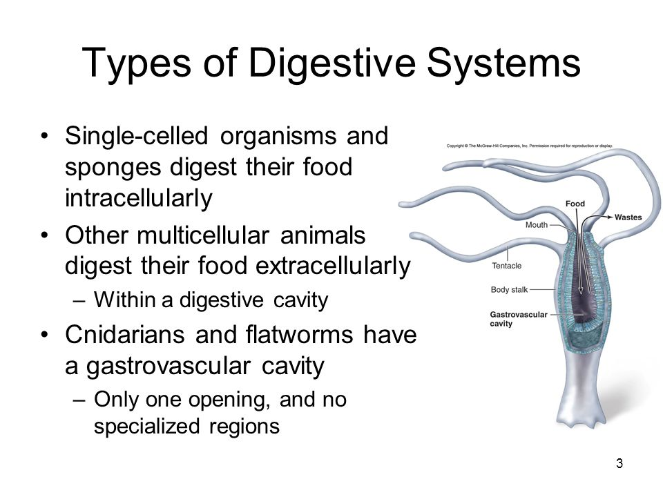 Types of Digestive Systems Specialization occurs when the digestive tract has a separate mouth and anus –Nematodes have the most primitive digestive tract Tubular gut lined by an epithelial membrane –More complex animals have a digestive tract specialized in different regions 4