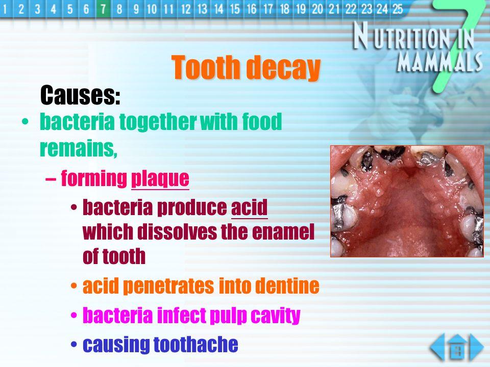 Dentition dental formula e.g. Human (permanent set) = 2123 2123 other dentitions :