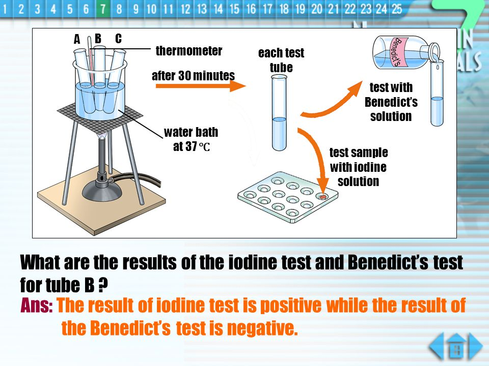 What are the results of the iodine test and Benedicts test for tube A .