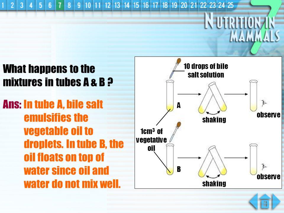 Effect of Bile Salt on Fat