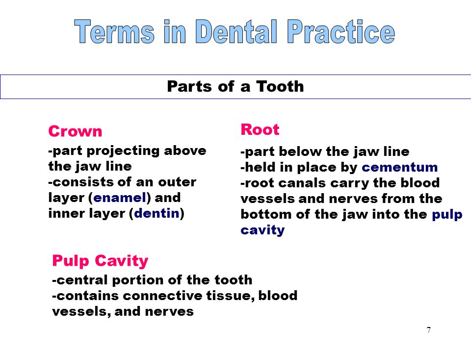 6 Teeth NOTE: Permanent teeth are not replaced by the body if they are lost.