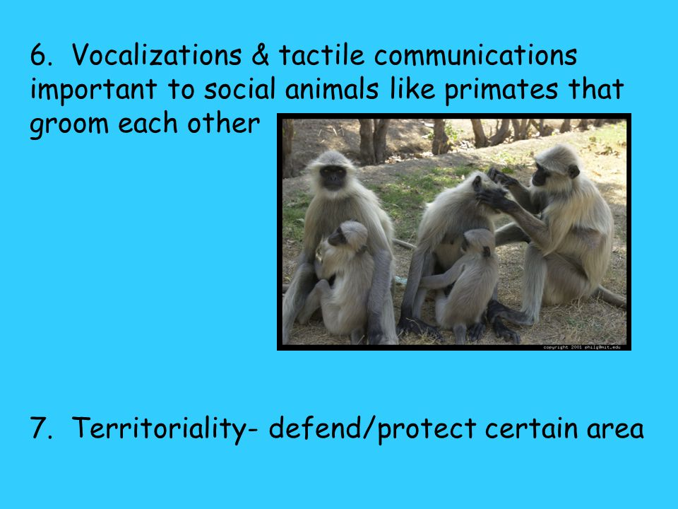 5. Auditory & tactile communications important especially to herd animals