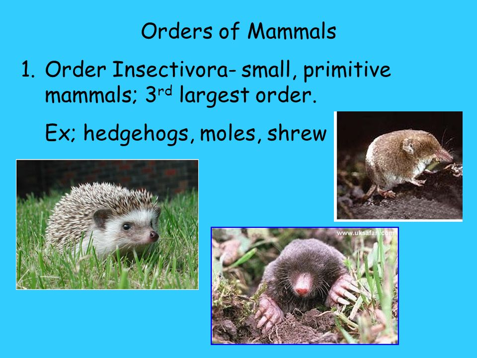 C. Eutherian mammals- longer gestation periods (20-19 months) Offspring are nourished by the placenta. ***The longer the gestation period, the longer