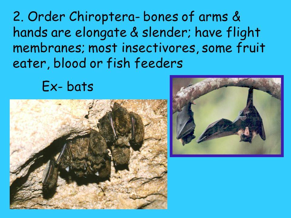 Orders of Mammals 1.Order Insectivora- small, primitive mammals; 3 rd largest order. Ex; hedgehogs, moles, shrew