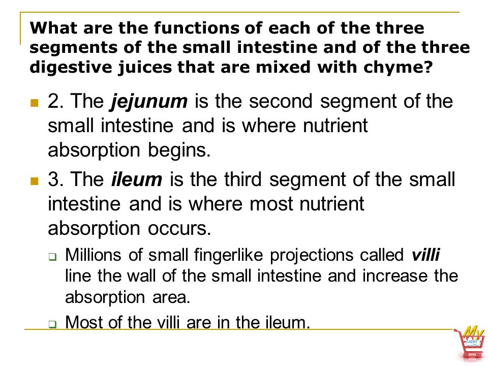 What are the functions of each of the three segments of the small intestine and of the three digestive juices that are mixed with chyme.