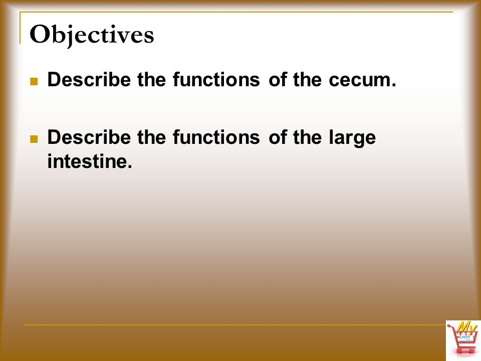 Objectives Describe the functions of the cecum. Describe the functions of the large intestine.