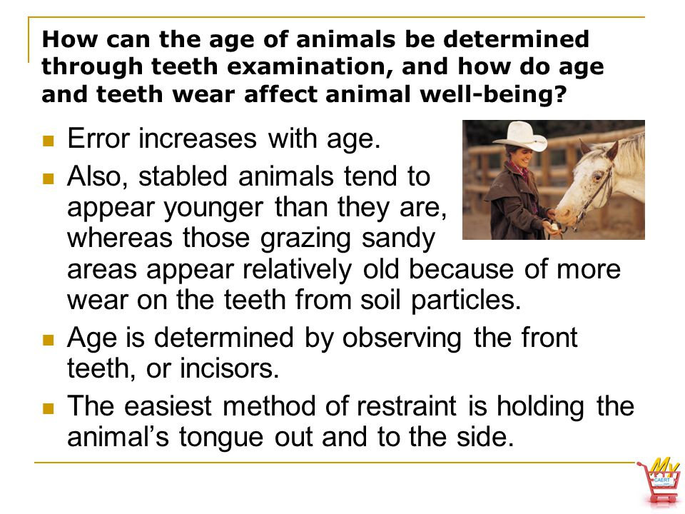How can the age of animals be determined through teeth examination, and how do age and teeth wear affect animal well-being.