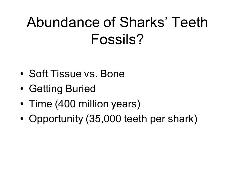 Abundance of Sharks Teeth Fossils? Soft Tissue vs. Bone Getting Buried Time (400 million years) Opportunity (35,000 teeth per shark)
