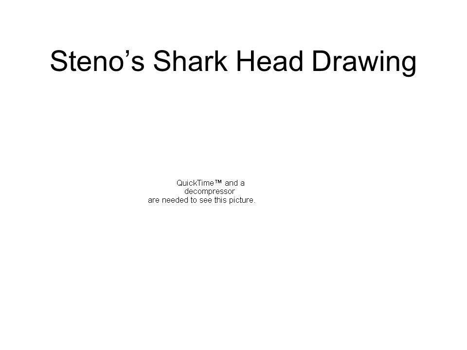 Stenos Shark Head Drawing