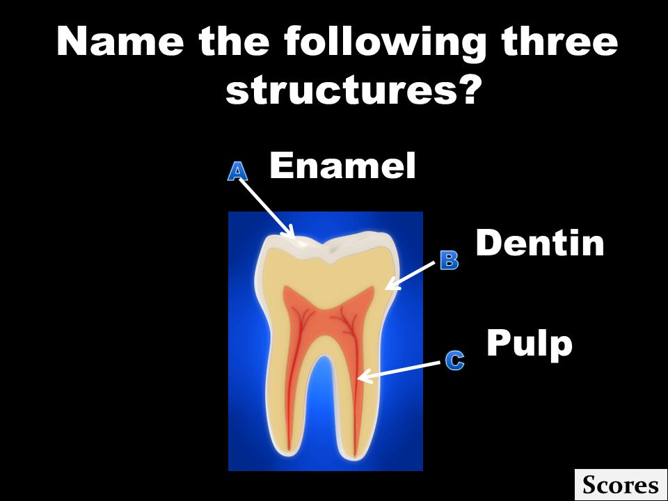 Name the following three structures Scores Enamel. Dentin Pulp