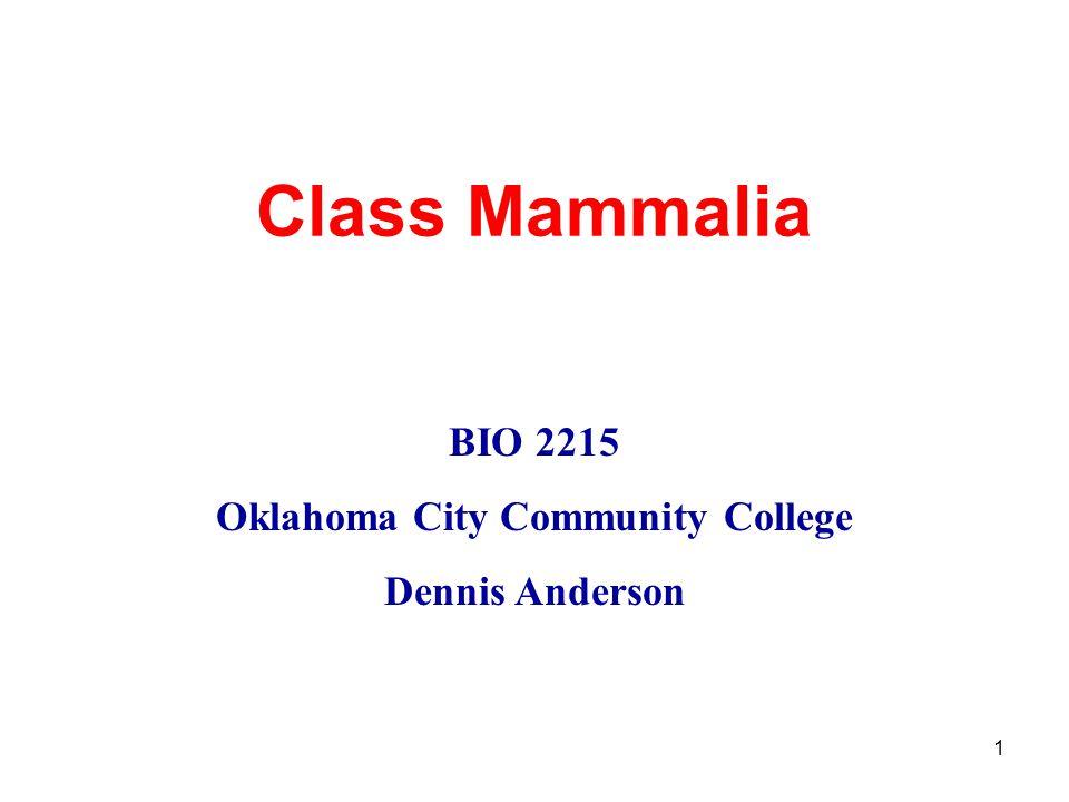 1 Class Mammalia BIO 2215 Oklahoma City Community College Dennis Anderson