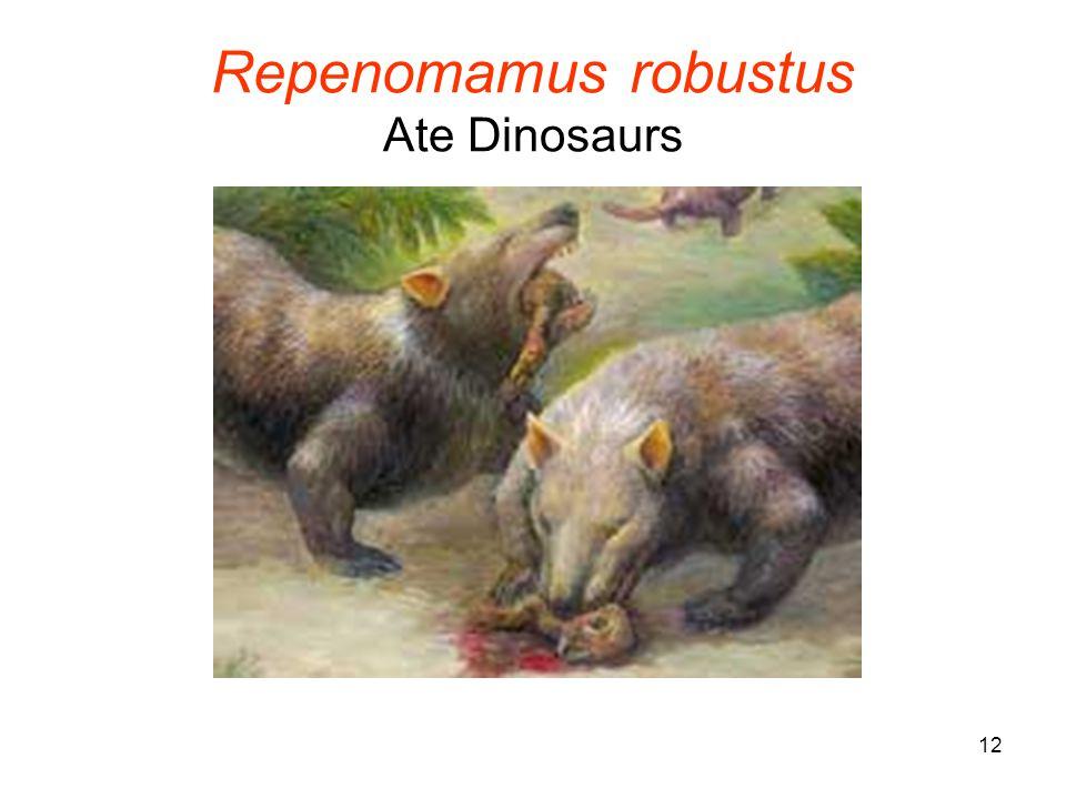 12 Repenomamus robustus Ate Dinosaurs