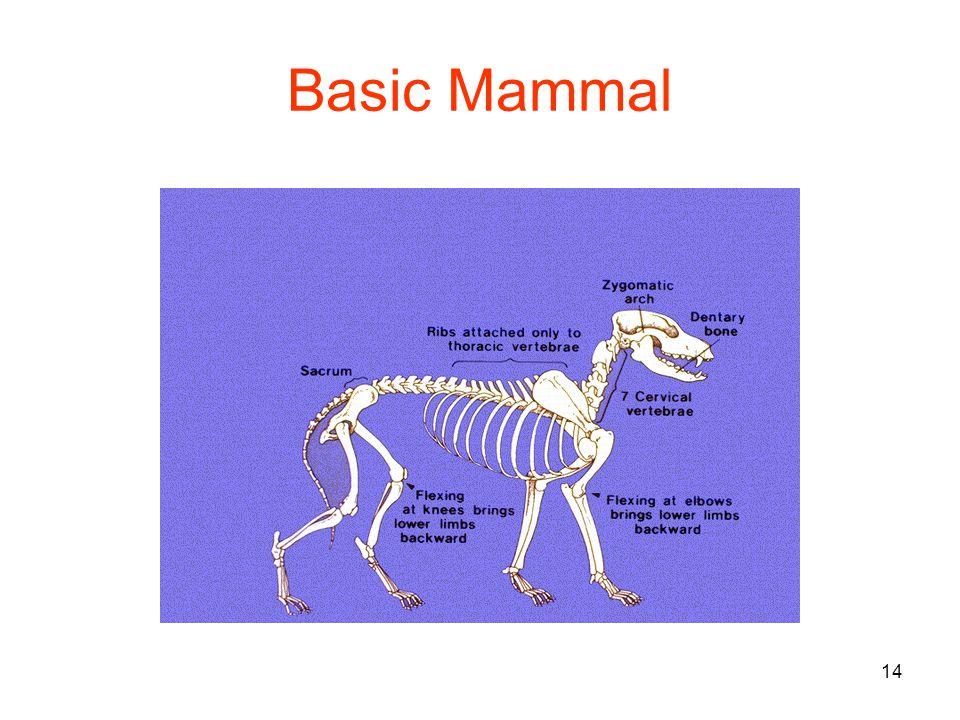14 Basic Mammal