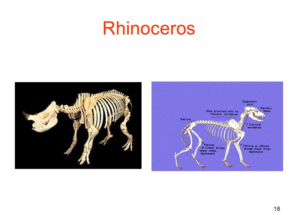 16 Rhinoceros
