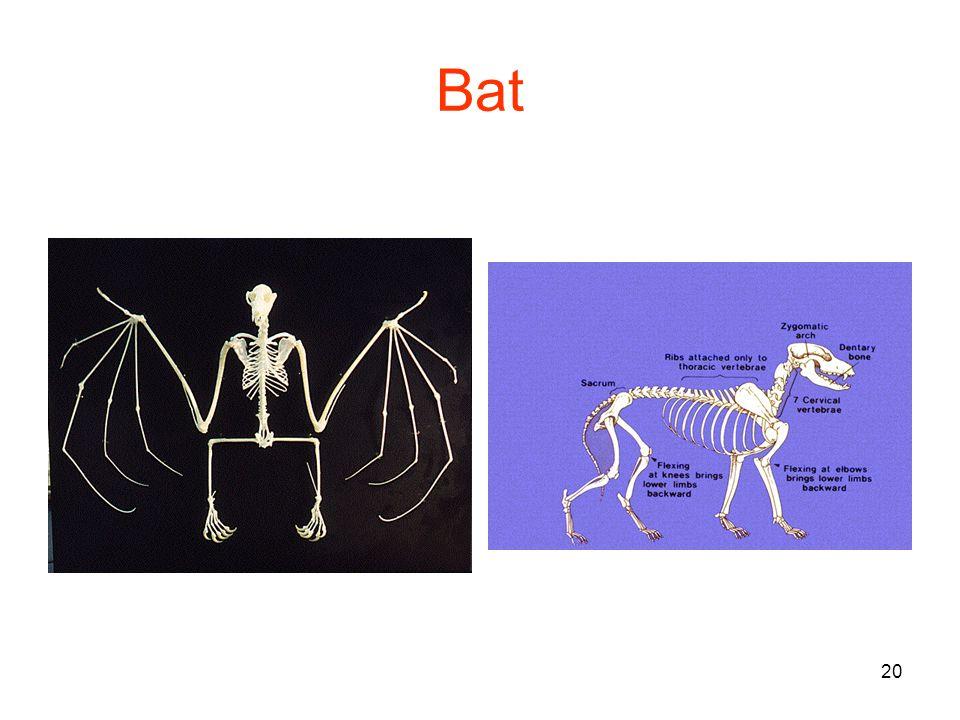 20 Bat