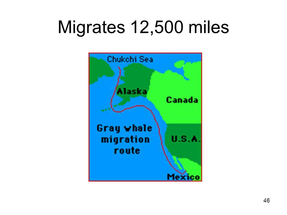 46 Migrates 12,500 miles