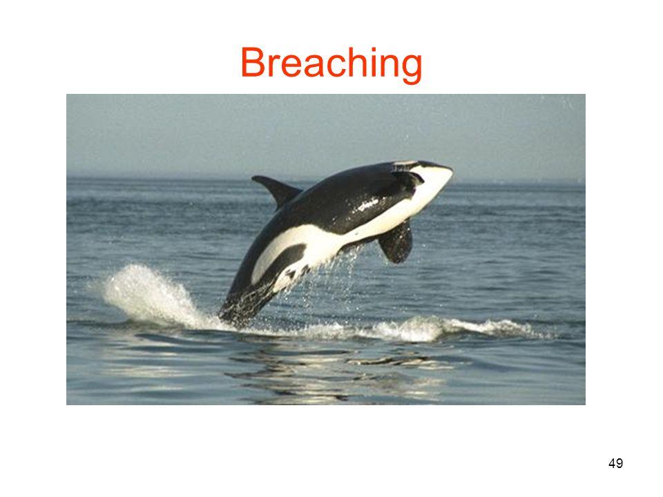 49 Breaching